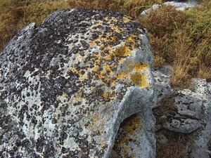 A SERRA VIII (Petroglifo) (ESGOS)